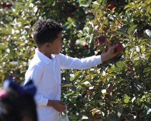 Student picking apples